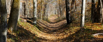 NATCHEZ TRACE NATIONAL SCENIC TRAIL