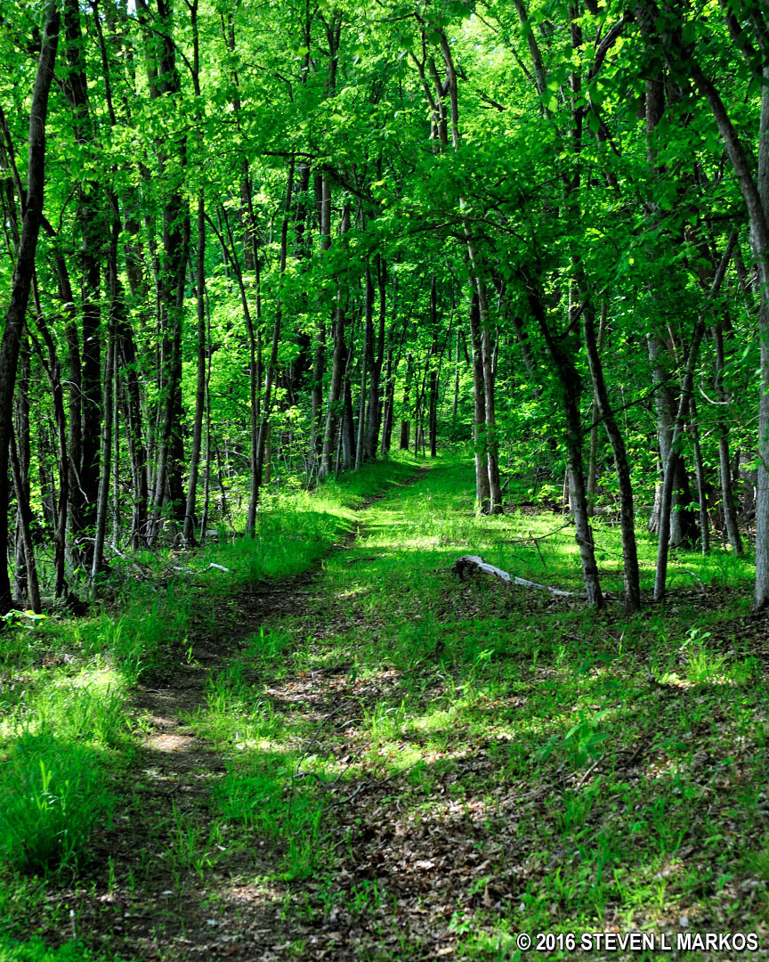 piscataway park piscataway creek trail typical terrain on the piscataway creek trail