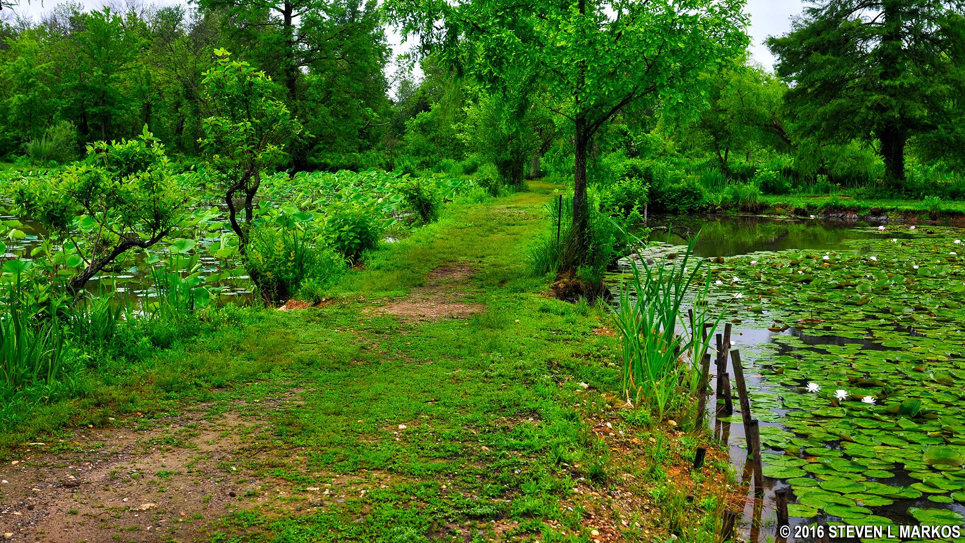 Kenilworth Park and Aquatic Gardens AQUATIC GARDENS